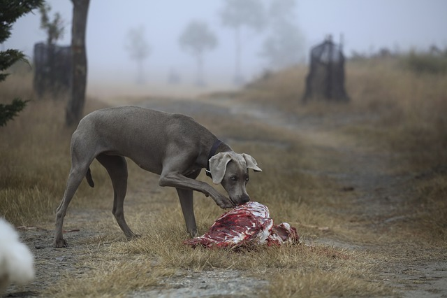 מאכלים מסוכנים לכלבים